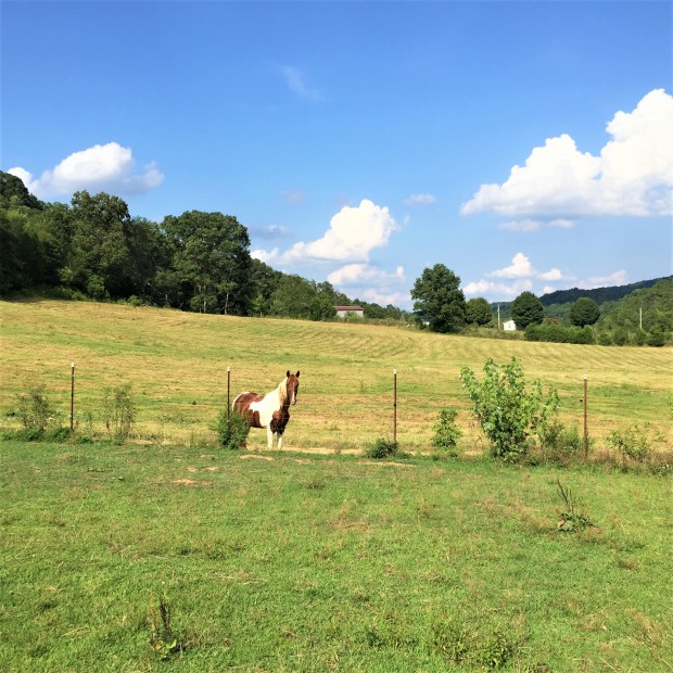 Rural Upper East Tennessee (2)